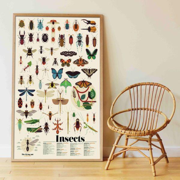poster éducatif insectes
