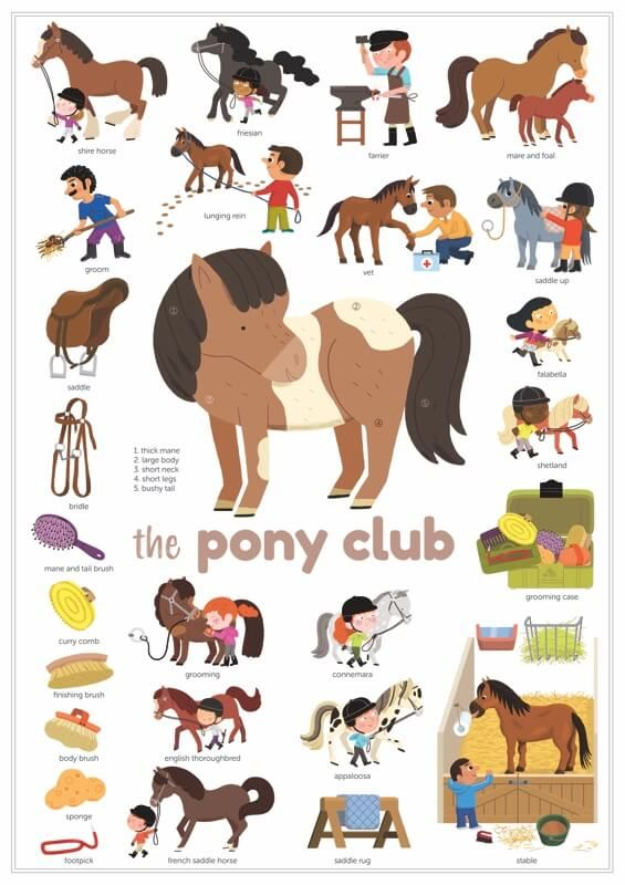 poster poney chevaux
